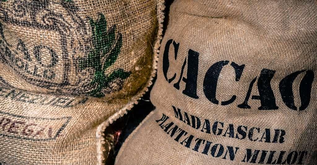 Sac de cacao. © Skitterphoto, Pixabay, DP