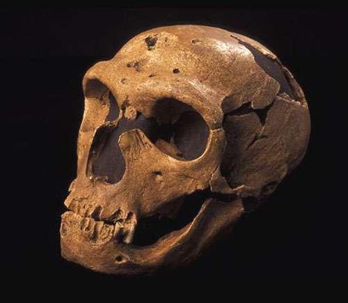 Néandertalien de la Chapelle-aux-Saints, en Corrèze