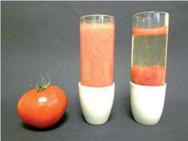 À gauche, en plaçant un jus de tomate dans une centrifugeuse, on peut séparer les pulpes (au fond du tube), l'eau de constitution (au milieu), et les fibres (en haut). Ainsi, pigments et arômes se séparent physiquement. Le Bloody Mary peut être revisité en un cocktail incolore aux notes fraîches (à droite). © R. Haumont