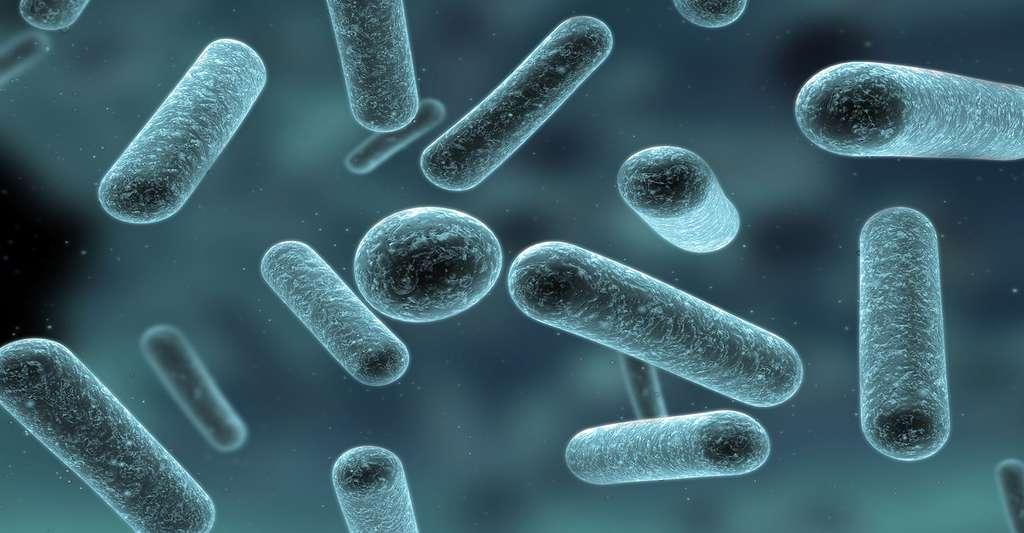 Bactéries du yaourt observées au microscope optique. © Sebastian Kaulitzki, Fotolia