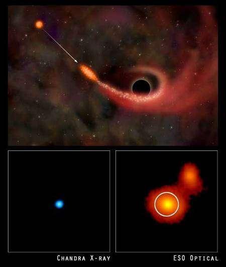 En 2004, les satellites Chandra et XMM Newton ont peut-être observé la disruption d'une étoile par un trou noir supermassif de plusieurs millions de masse solaire dans la galaxie RXJ1242-11. Le processus, ici avec une étoile normale, est à comparer avec celui proposé avec naine blanche. Notez en particulier la déformation de l'étoile en forme de crêpe . Crédit : Nasa/CXC/M. Weiss; X-ray : Nasa/CXC/MPE/S. Komossa et al.; Optical : ESO/MPE/S. Komossa