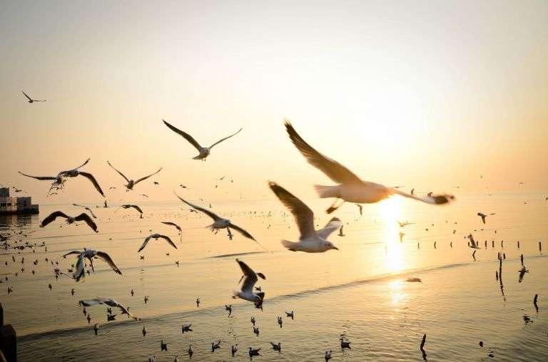 En Louisiane, la subsistance d'espèces sauvages d'oiseaux a permis de limiter la propagation de la fièvre du Nil. © Tom.Ruethai, Shutterstock.com