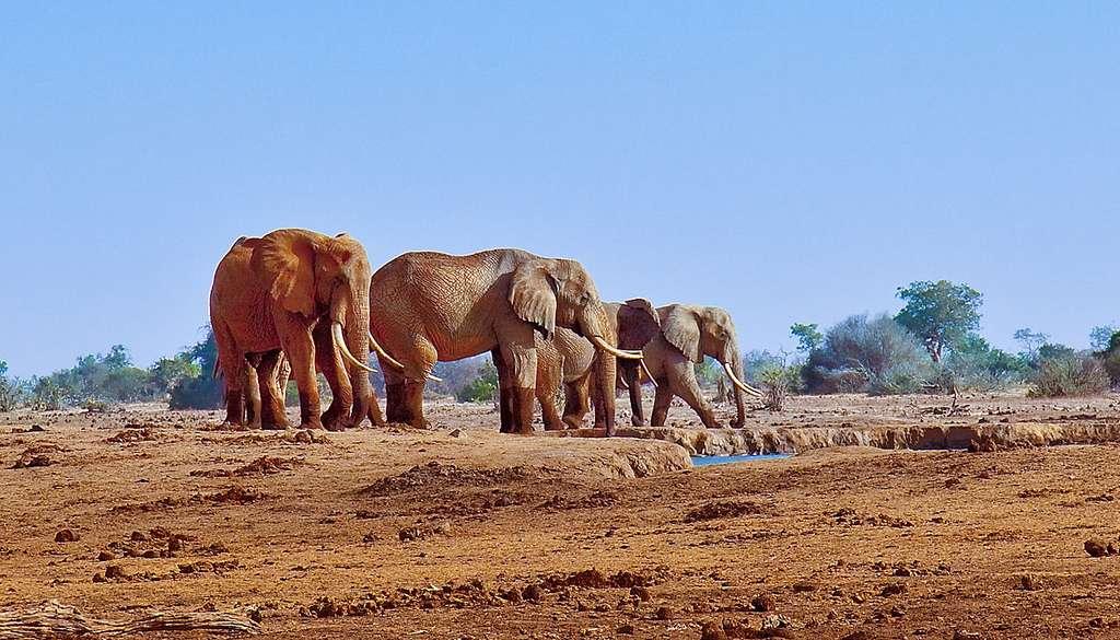 Troupeaux d'éléphants à proximité d'un trou d'eau près de « Satao Camp », Tsavo East wildlife reserve, au Kenya. © John Hickey-Fry, Wikimedia commons, CC 2.0