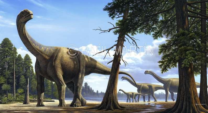 Camarasaurus ou Camarasaure