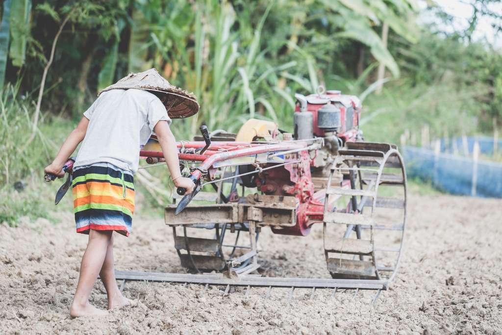 Les conséquences du réchauffement climatique sont de plus en plus impressionnantes dans les pays tropicaux dont l'agriculture est déjà très fragile. De nombreuses régions passent de la disette à la famine. © Tinnakorn, Adobe Stock