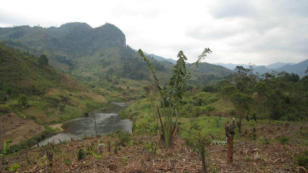 Vue sur la forêt malgache. © ecololo, Flickr, CC by-sa 2.0