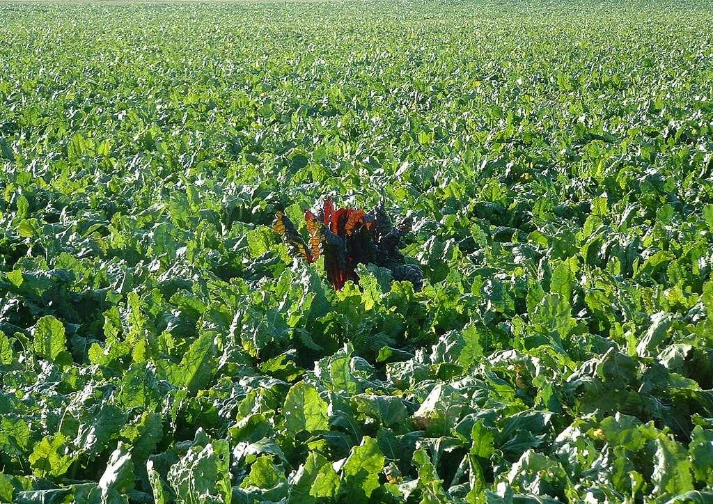 La France comptait 26 millions d'hectares fertilisables en 2011/2012, sur lesquels 8,4 millions de tonnes d'engrais minéraux ont été épandus (chiffres des Chambres d'agriculture). © OliBac, Flickr, cc by 2.0