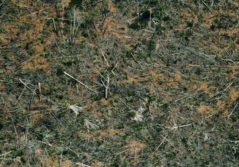 Vue aérienne d'une zone de déforestation de la forêt amazonienne, le 23 août 2019, près de Porto Velho, dans le nord du Brésil. © Carl De Souza, AFP/Archives