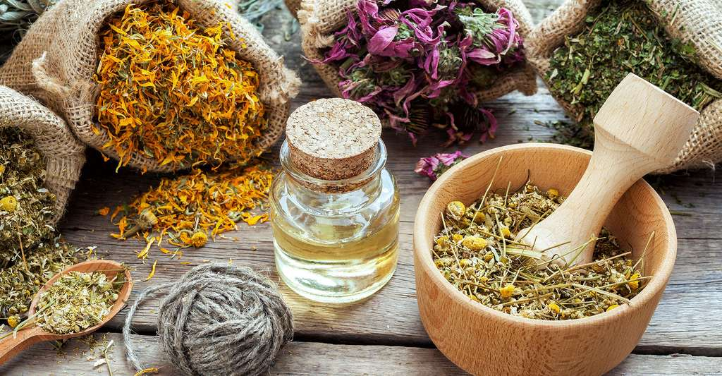 La phytothérapie représente aujourd'hui une alternative crédible à une thérapeutique conventionnelle dans le traitement des désagréments liés à la ménopause. © Chamille White, Shutterstock