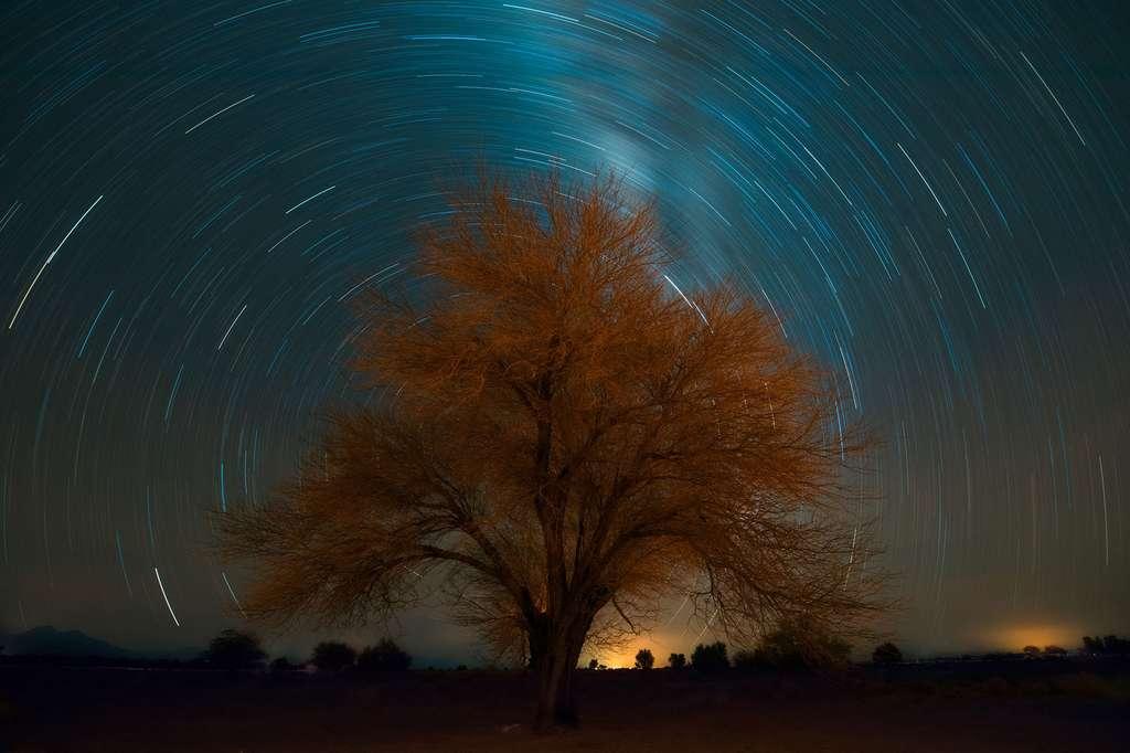 Un arbre dans le désert d'Atacama