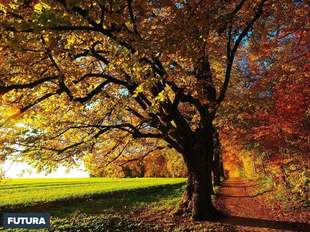 L'automne, une saison d'or et de pluie