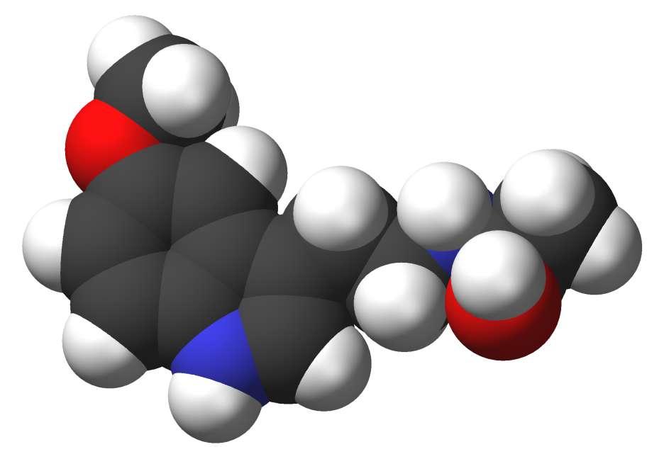 La mélatonine ou N-acétyl-5-méhoxytryptamine, plus connue sous le nom d'hormone du sommeil, possède un rôle central dans la régulation des rythmes chronobiologiques. Elle est sécrétée par la glande pinéale présente dans le cerveau, principalement la nuit (en absence de lumière). Les petits dormeurs, qui en produisent moins, auraient plus de risque de développer un cancer de la prostate. © Sbrools, Wikimedia Commons, cc by sa 3.0