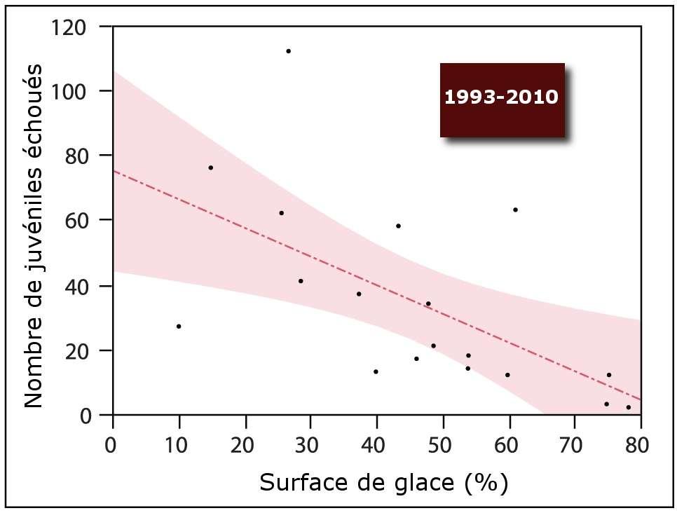 Corrélation entre le nombre de juvéniles échoués et la surface de la glace, entre 1993 et 2010. © Johnston et al. 2012, Plos One - adaptation Futura-Sciences