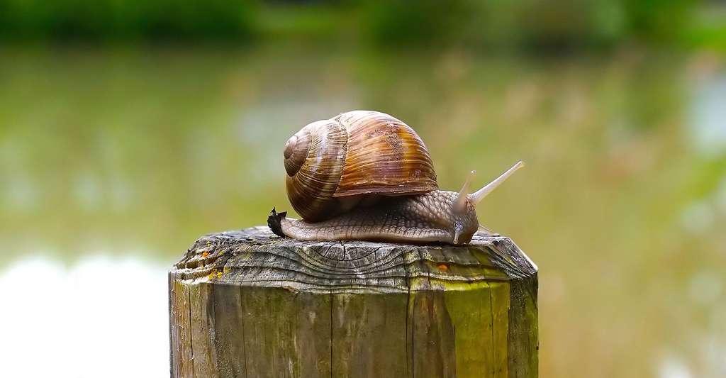 Décrypter la suite de Fibonacci sur une coquille d'escargot. © 422737, CCO