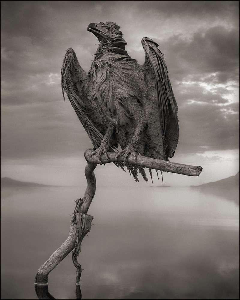 Aigle momifié du lac Natron. © Nick Brandt