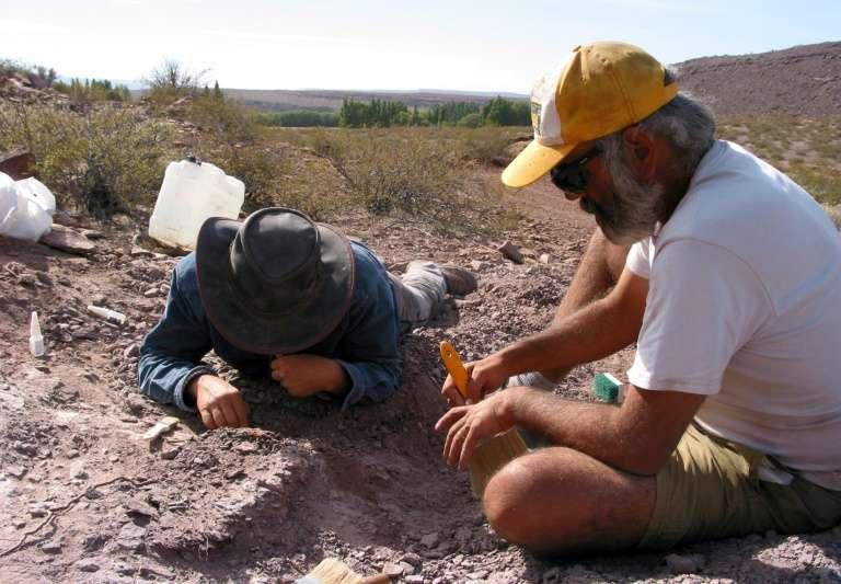 Des chercheurs ont découvert une nouvelle espèce de dinosaure dans la province de Neuquen en Argentine. Photo mise à disposition par l'agence CTyS, le 2 novembre. © HO, Agencia CTyS, AFP