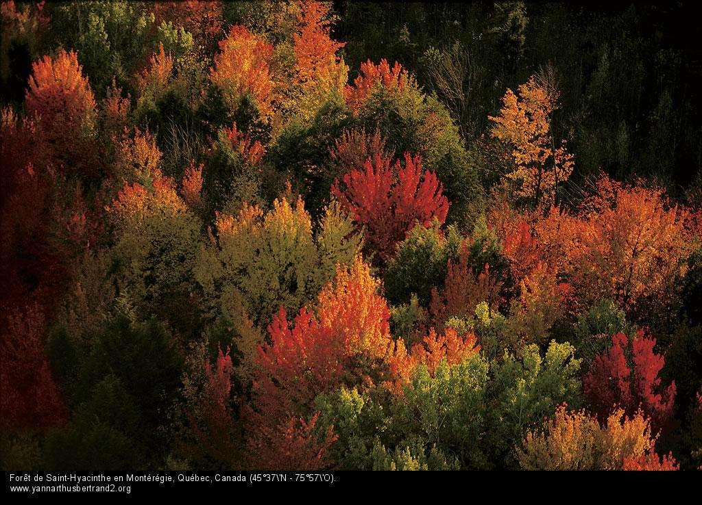 Forêt de Saint-Hyacinthe en Montérégie