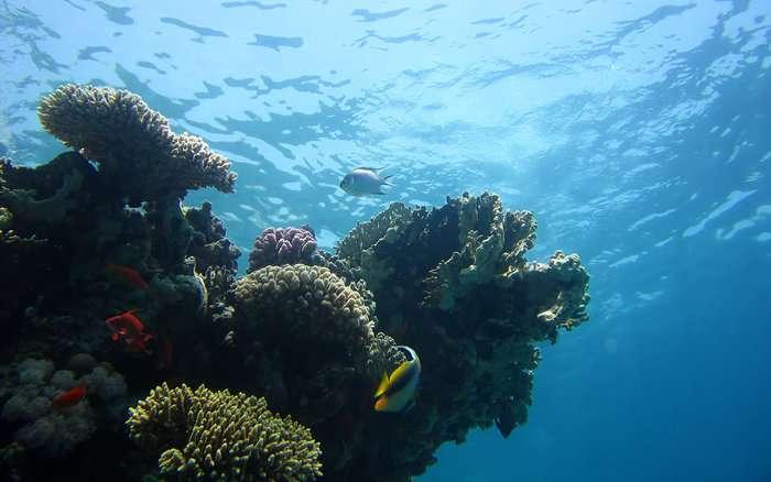 Les émissions massives de dioxyde de carbone (CO2) dans l'atmosphère terrestre provoquent une acidification des océans. Les coraux font partie des organismes les plus vulnérables. La biodiversité marine est très menacée par cette baisse du pH sans précédent depuis plusieurs millions d'années. © V. Piazza