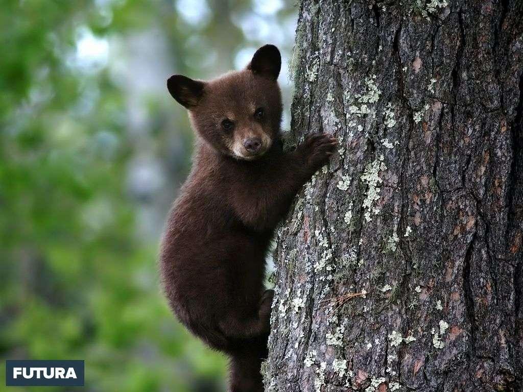 Un amour d'ourson