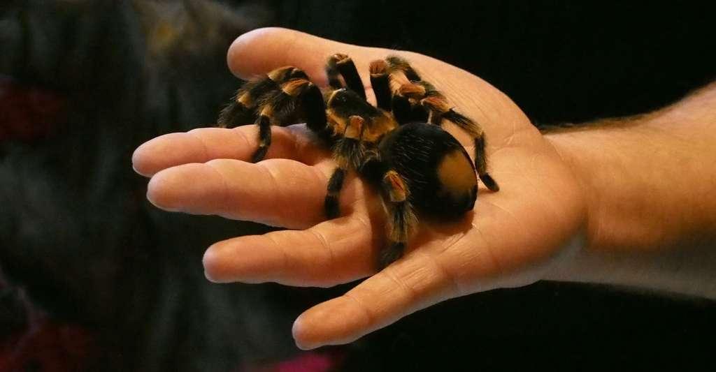 Pour surmonter — ou au moins mieux vivre avec — votre peur des araignées, vous ne devriez pas avoir à aller jusqu'à prendre dans votre main l'une de ces petites bêtes. © NGi, Pixabay, CC0 Public Domain