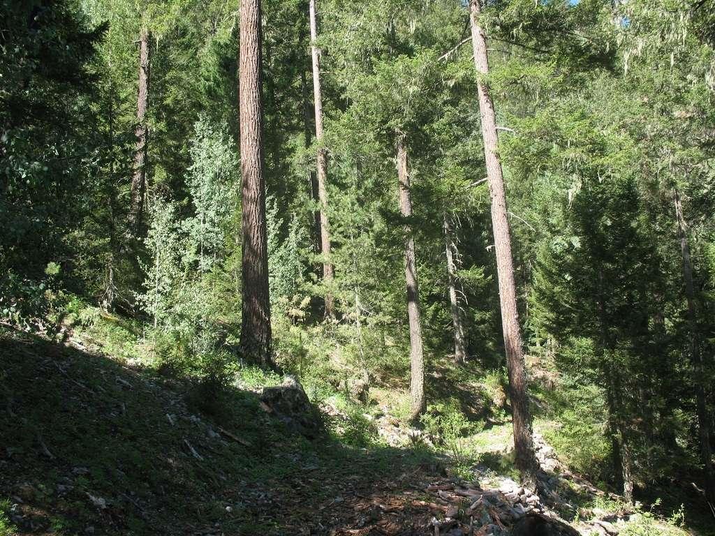 Forêt de sapins de Douglas. © Guillermo S., Flickr by nc-nd 3.0
