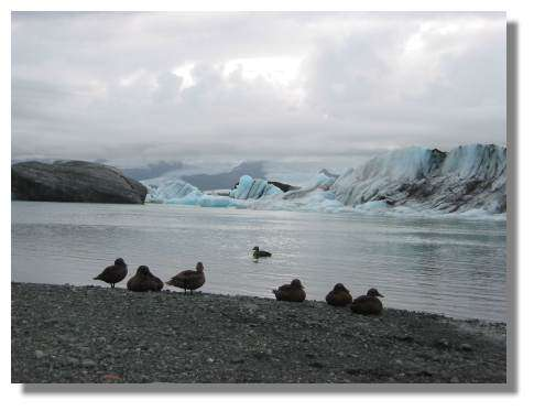 Iceberg - Copyright Islande - Copyright Photo Daniel Brindeau
