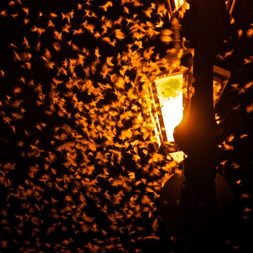 Les insectes confondent les ampoules avec la lumière des astres, qu'ils utilisent comme repères. © Oiluj Samall Zeid, Visualhunt.com, CC by-nc-nd