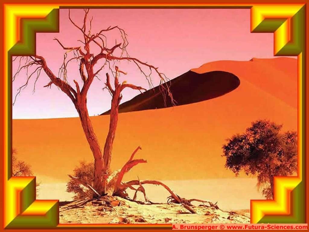 Sahara et dune