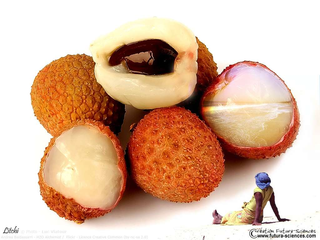 Litchi fruit tropical