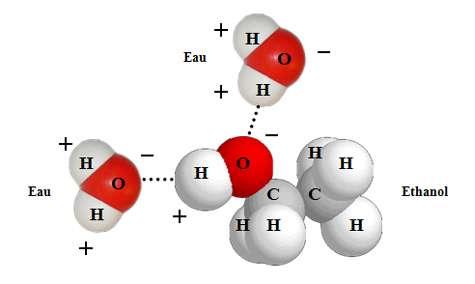 En mettant de l'alcool dans de l'eau, les molécules d'eau vont entourer chaque molécule d'éthanol. © DR