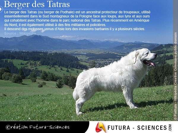 Berger des Tatras