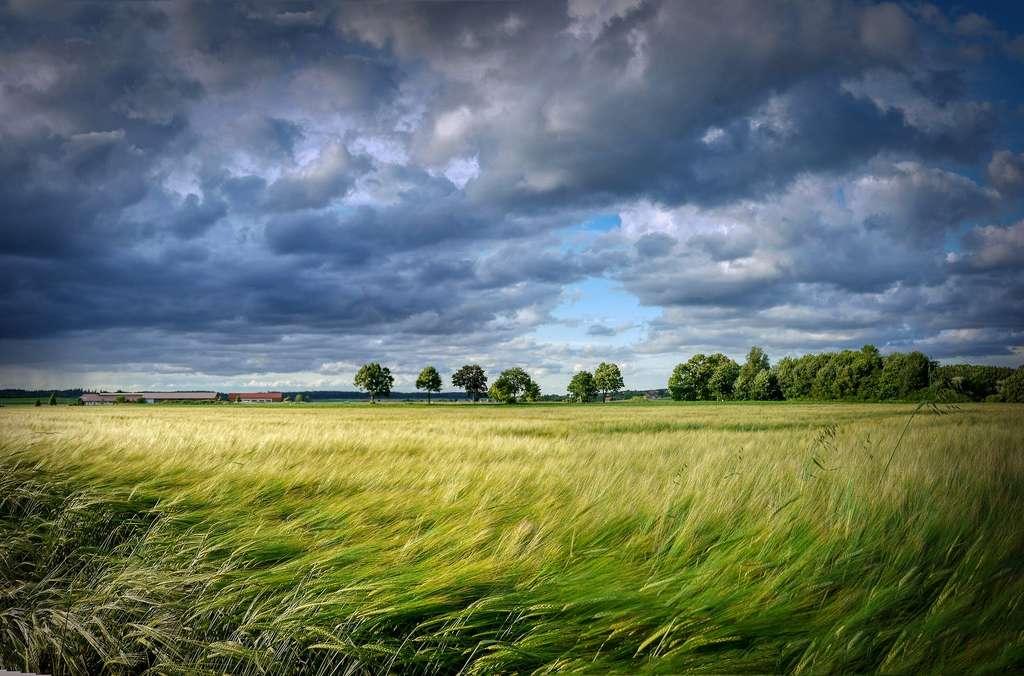 Champs de céréales. © Fietzfotos, Pixabay, DP