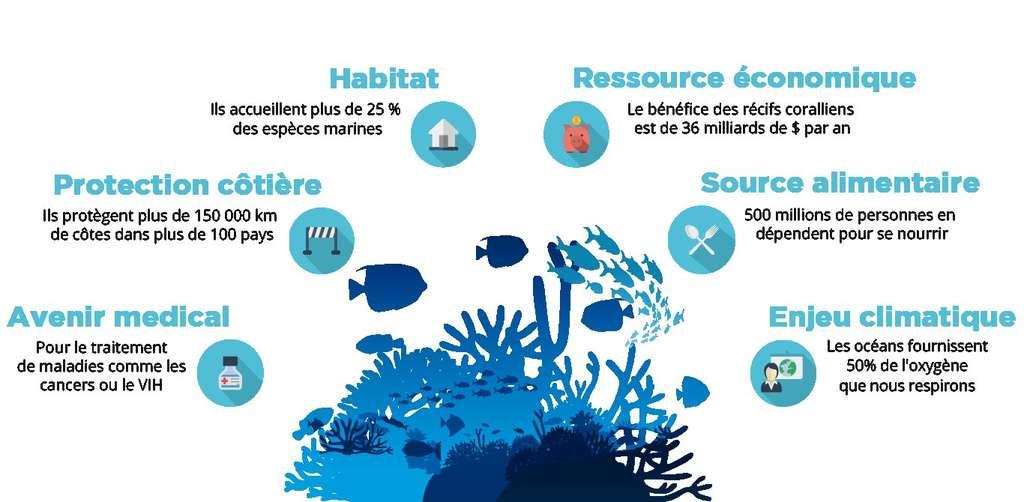 Les récifs coralliens jouent une multitude de rôles très importants, pour la biosphère et pour les sociétés humaines. © Coral Guardian