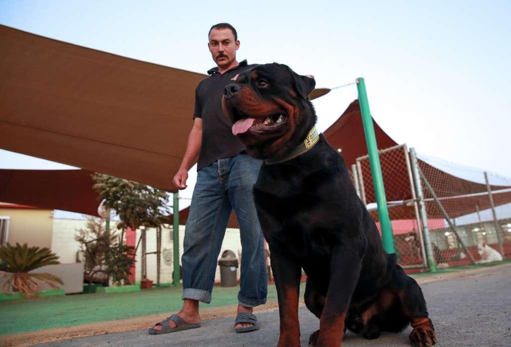 Le flair des chiens permettrait d'établir un diagnostic rapide et non-invasif. © Khalil Mazraawi, AFP
