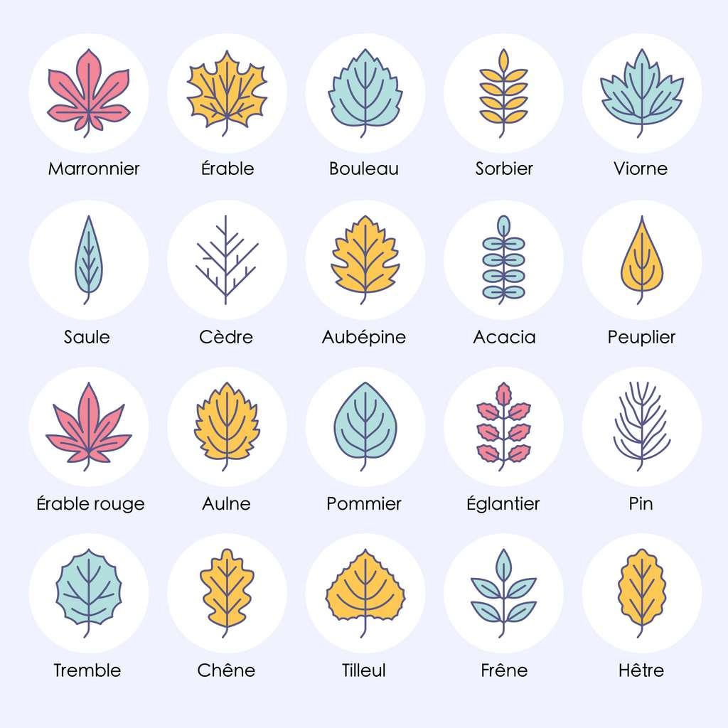 Les feuilles de différents arbres. © nadiinko, Adobe Stock ; traduction et adaptation C.D pour Futura
