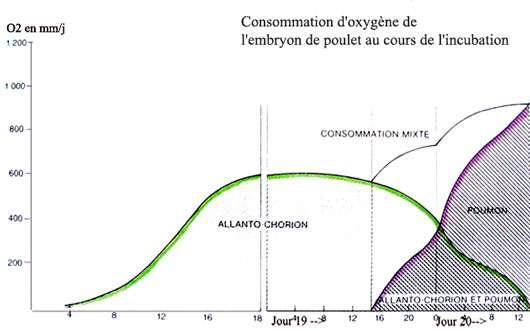 Consommation d'oxygène de l'œuf en fonction du développement de celui-ci. © Reproduction et utilisation interdites