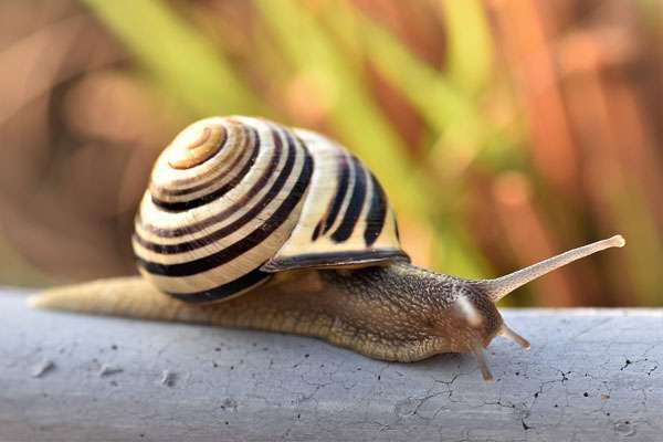 Quelle sera la distance parcourue par l'escargot ? © Pitsch, Pixabay, DP