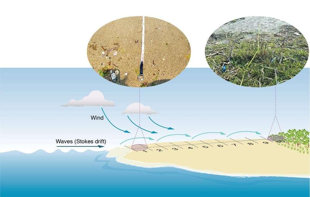 La majorité des gros déchets sont transportés par le vent jusqu'à l'arrière-côte où ils restent coincés dans la végétation. © CSIRO