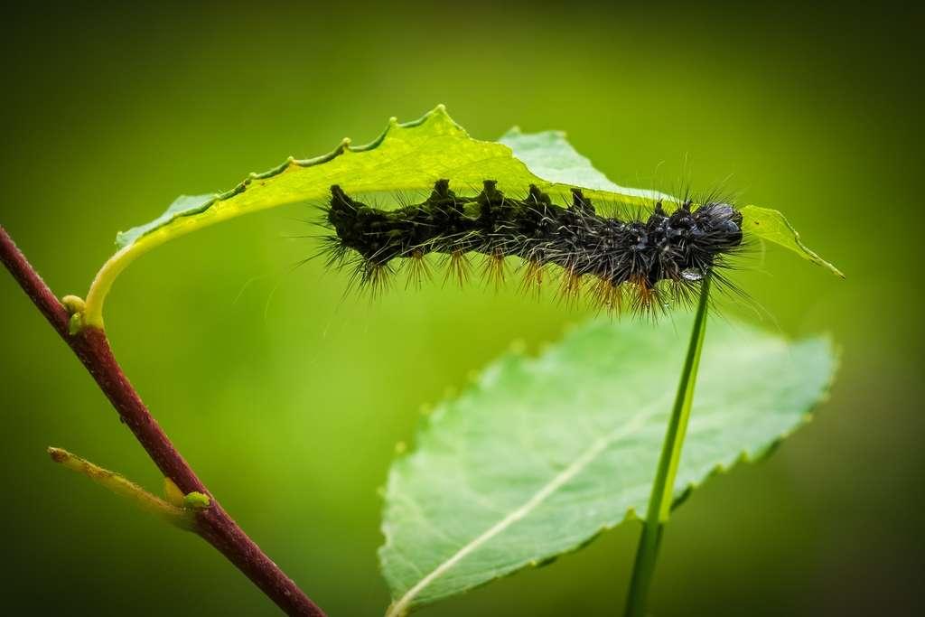 Le réchauffement pourrait favoriser la prolifération d'insectes s'attaquant aux plantes. © PxHere