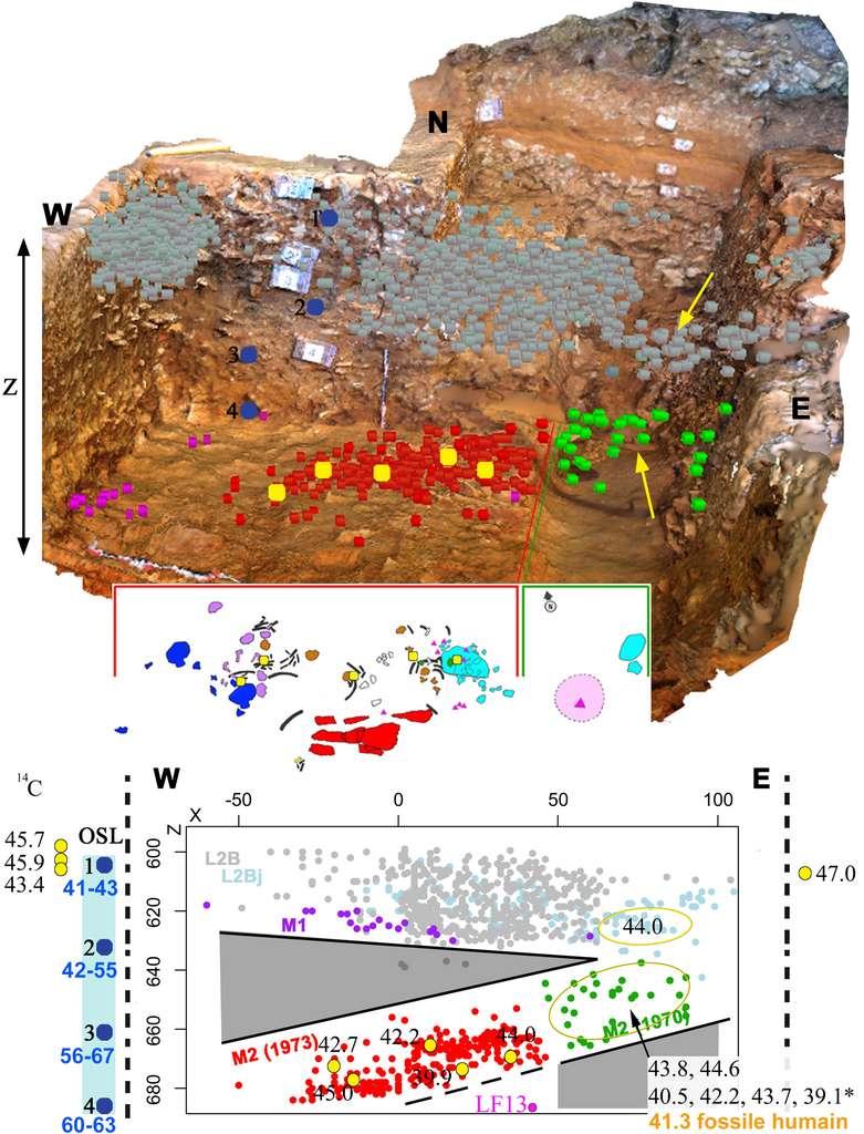 La Ferrassie en huit dates. Vue du dessus d'un modèle 3D de la zone fouillée en 2014 où a été découvert le Néandertalien La Ferrassie 8 (en haut). Plan en 2D des restes de l'enfant et des objets associés (au milieu). Projection dans la direction Est-Ouest de tous les objets découverts dans cette zone du site (en bas). Les restes archéologiques associés à l'enfant néandertalien (représentés par les points rouge et verts) sont bien séparés de la couche située au-dessus (point gris) et ne suivent pas l'orientation naturelle des autres couches archéologiques. Les âges obtenus par 14C (localisés par des points et flèches jaunes) montrent que le fossile humain directement daté est plus récent que les objets venant de la couche située au-dessus et que le sédiment, daté par la méthode OSL (points bleus et valeurs en bleu), qui l'entoure. © Antoine Balzeau, CNRS, MNHN