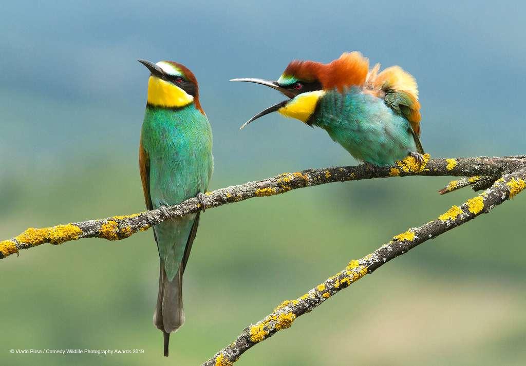 Problème de couple entre ces deux oiseaux colorés. © Vlado-Pirsa, Comedy Wildlife Photography Awards