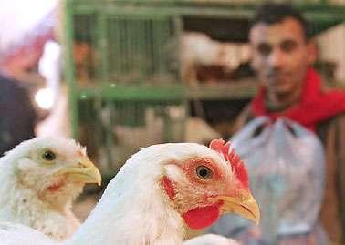 Tout savoir sur le virus influenza A de la grippe aviaire. © DR
