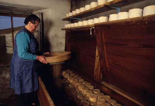 Marinette, artisan fromager, saupoudrant ses fromages d'acariens. © Pascal Goetgheluck, reproduction et utilisation interdites