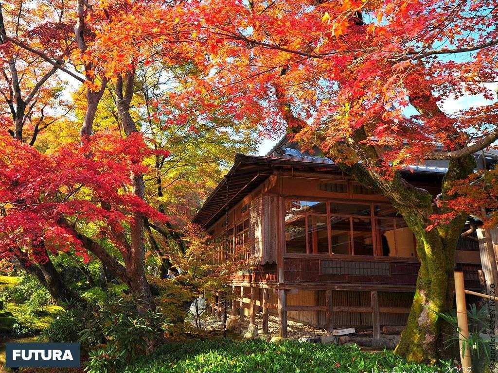 Couleurs d'automne au Japon