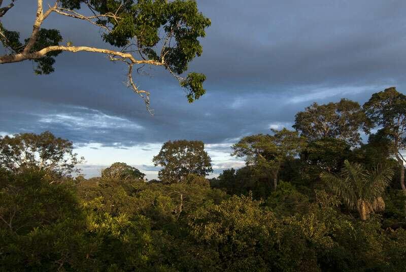 Canopée en forêt amazonienne. © Sylvain Lefebvre et Marie-Anne Bertin, DR