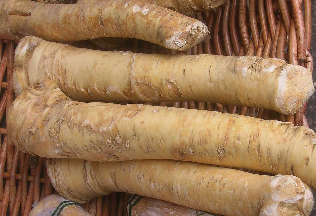 Racines de raifort. © Anna Reg, CC by-nc 3.0