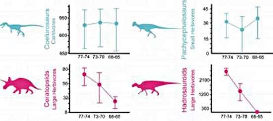 Ces quatre graphiques présentent la diversité de plusieurs grands groupes de dinosaures (cœlurosaures, pachycephalosaures, cératopidés et hadrosaures) durant les 12 derniers millions d'années du Crétacé supérieur. L'axe des abysses correspond à une échelle de temps de - 77 à - 65 millions d'années. L'axe des ordonnées représente de manière simplifiée la disparité morphologique. Les deux taxons d'herbivores, en rose (ceratopids et hadrosauroids), étaient très nettement dans une phase de déclin à long terme, à l'inverse des carnivores (cœlurosaurs) et petits herbivores (pachycephalosaurs), en bleu, qui se portaient bien. © S. Brusatte, AMNH