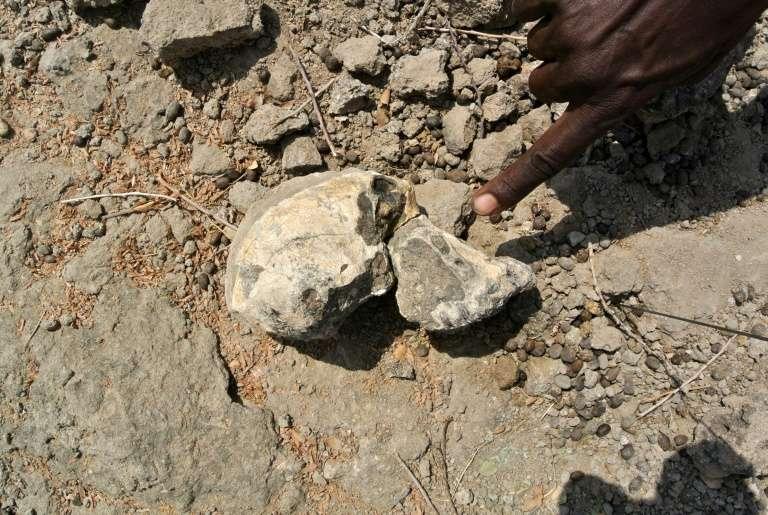 Photo fournie par le Museum of Natural history de Cleveland le 28 août 2019 montrant un fragment de crâne d'Australopithèque vieux de 3,8 millions d'années découvert en Ethiopie. © HO - Cleveland Museum of Natural history, AFP