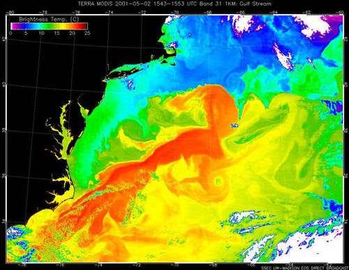 2 - Températures de surface du Gulf Stream. Les tourbillons, équivalents des dépressions atmosphériques, vivent plusieurs mois voire plus d'un an.