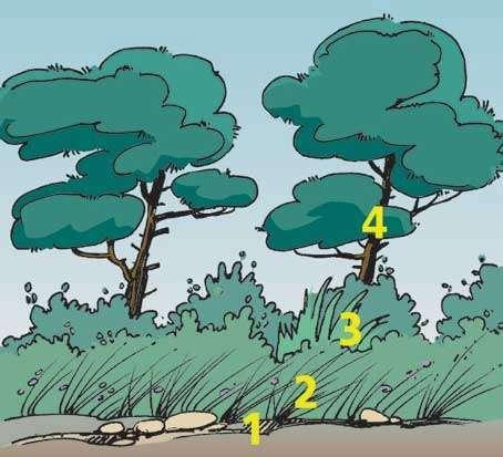 Les quatre étages de la végétation.